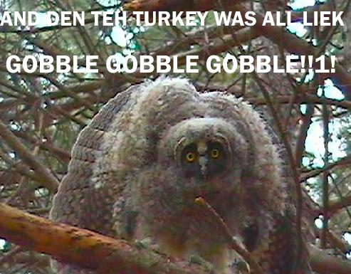 owlgobblevg5 1