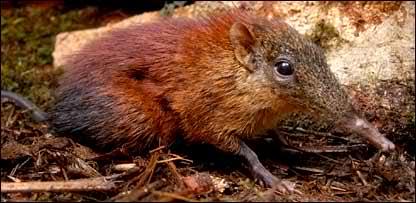 'Bizarre' new mammal discovered
