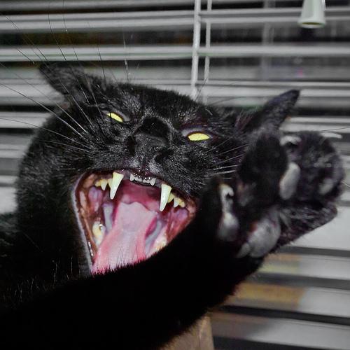 Cat attacks babysitter